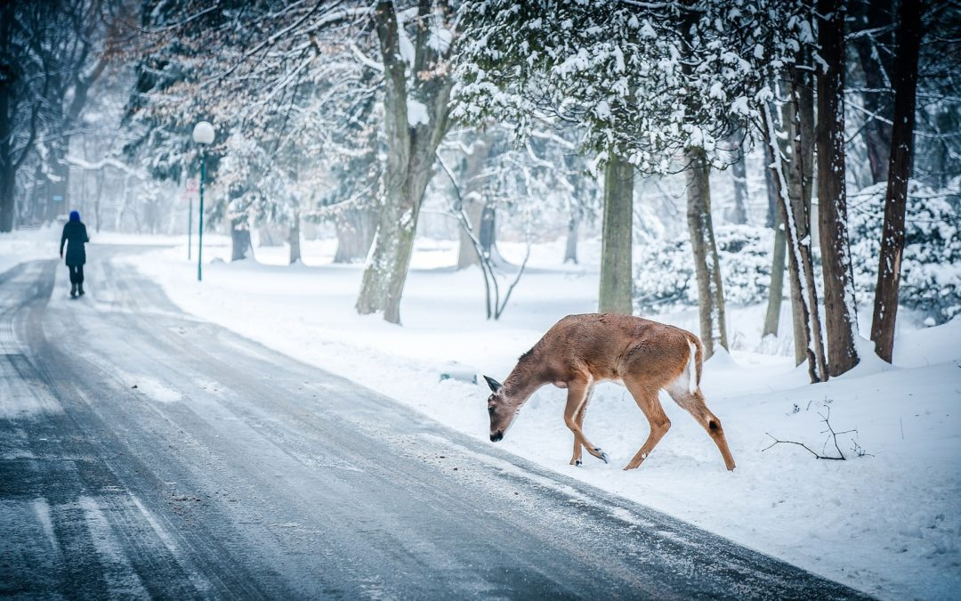 Please Move The Deer Crossing Sign