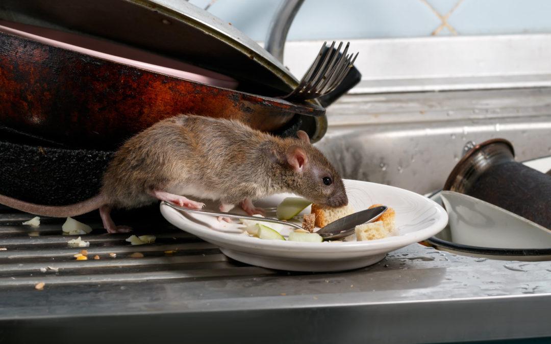 subway rodent